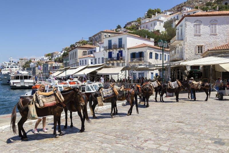 Cavalli, cavallini, muli ed asini alla hydra di Oporto fotografia stock