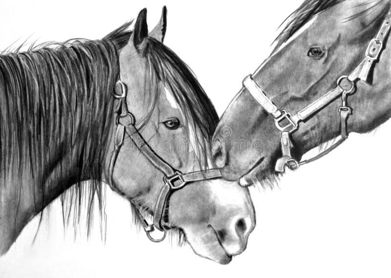 Cavalli che frugano, disegno di realismo della matita illustrazione vettoriale