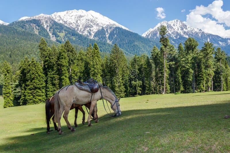 Cavalli che pascono, il Jammu e Kashmir, Mini Switzerland fotografie stock libere da diritti