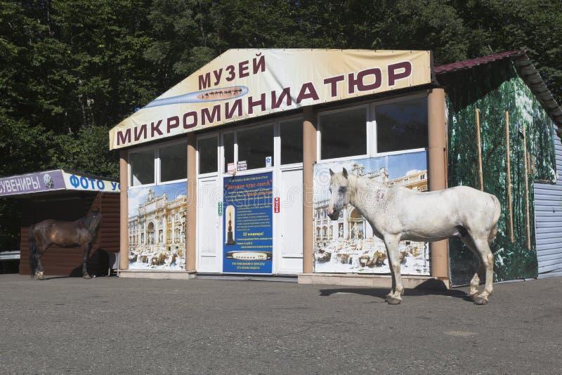 Cavalli che passeggiano vicino del museo delle miniature sulla montagna grande Ahun nel distretto della hosta di Soci immagini stock libere da diritti