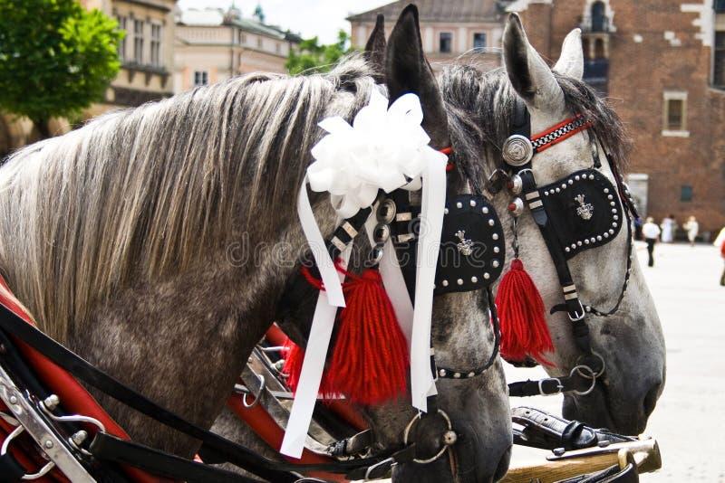 Cavalli Cracovia Polonia immagine stock