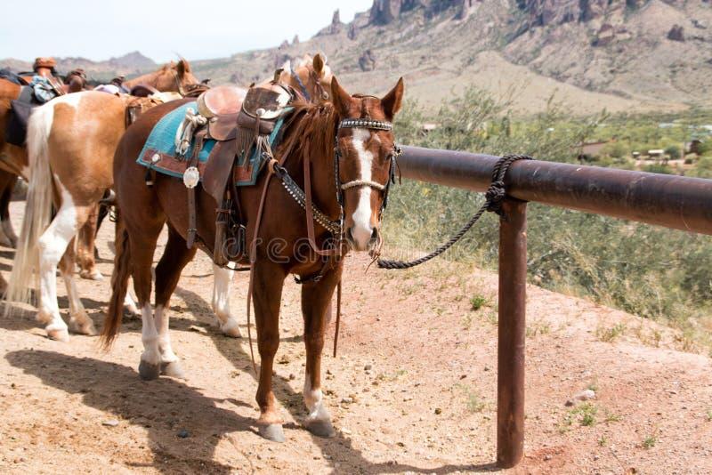 Cavalli da equitazione nel paese fotografie stock