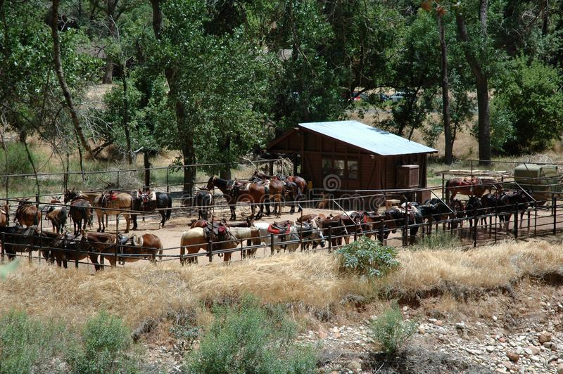Cavalli da sella in recinto chiuso nel parco di Zion National fotografie stock libere da diritti