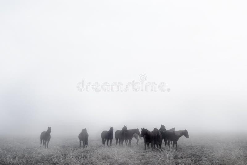 Cavalli della prateria immagini stock