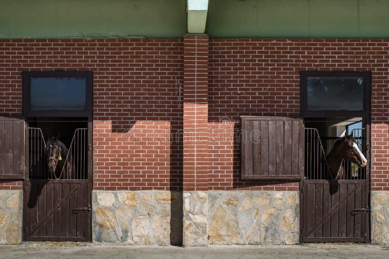 Cavalli di Brown che esaminano la porta stabile fotografie stock