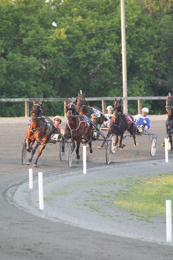 Cavalli di corsa di Standardbred immagine stock libera da diritti