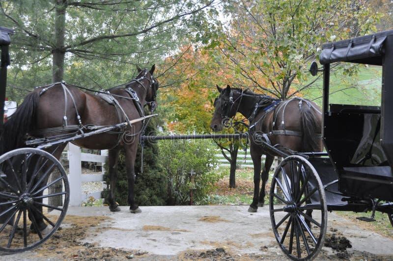 Cavalli e carrelli di Amish fotografie stock libere da diritti