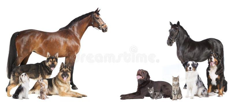 Cavalli e collage dei cani fotografia stock libera da diritti