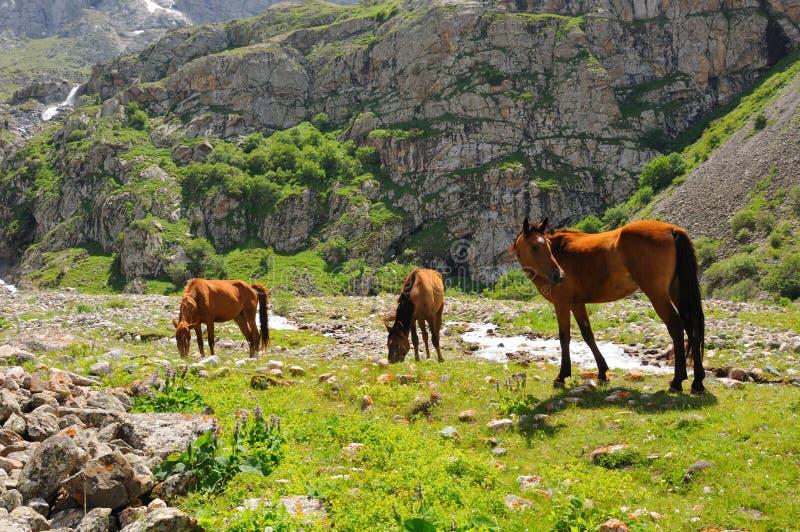 Cavalli e fiume della montagna fotografia stock libera da diritti