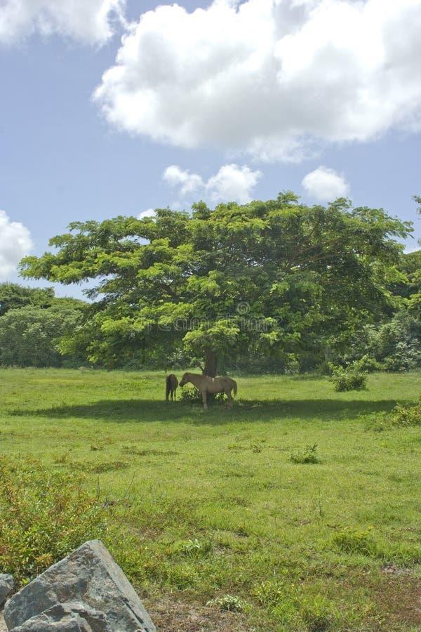 Cavalli ed albero
