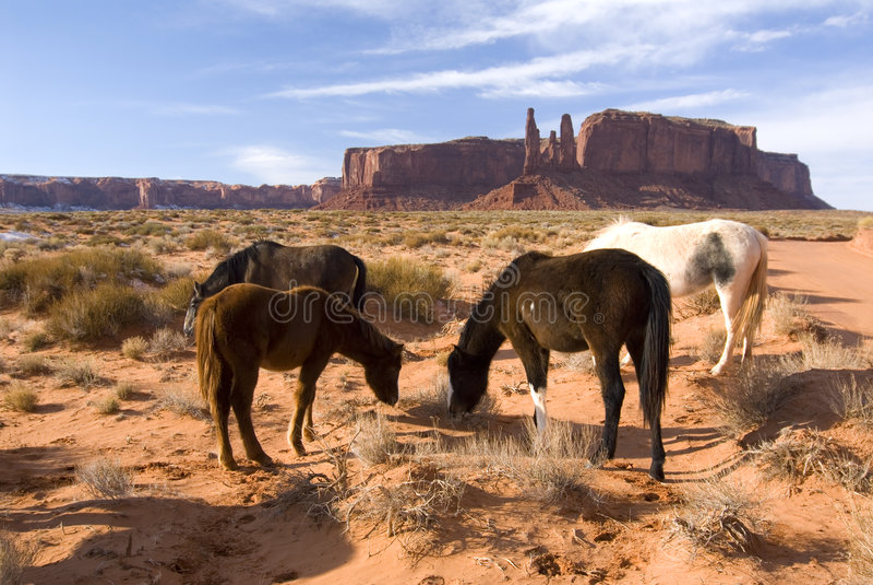 Cavalli nel cerchio in valle del monumento fotografia stock libera da diritti