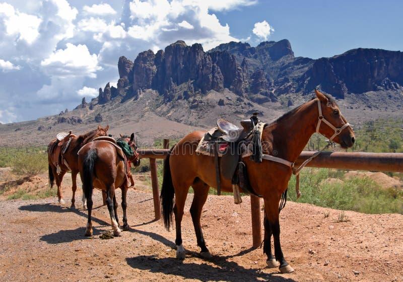 Cavalli nel deserto fotografia stock
