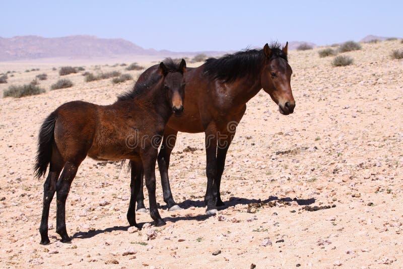Cavalli selvaggi immagini stock