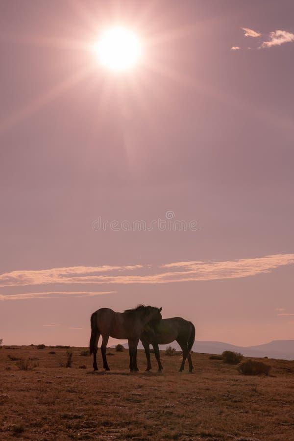 Cavalli selvaggii al tramonto fotografia stock