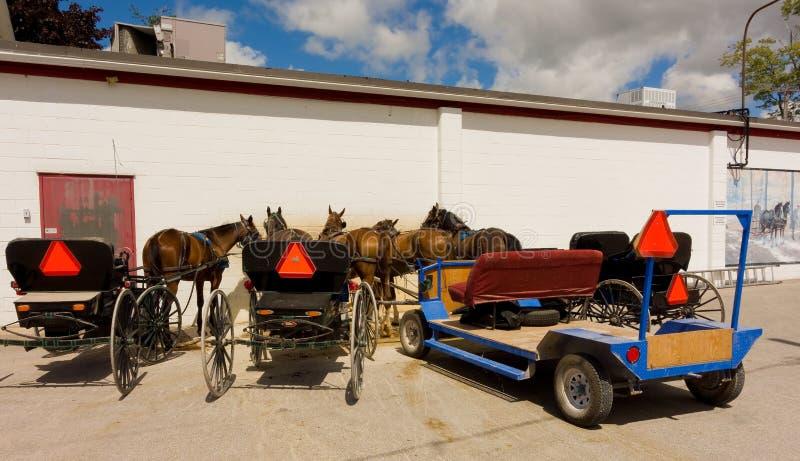 cavalli sfruttati usati per tirare i vagoni di Amish fotografia stock libera da diritti