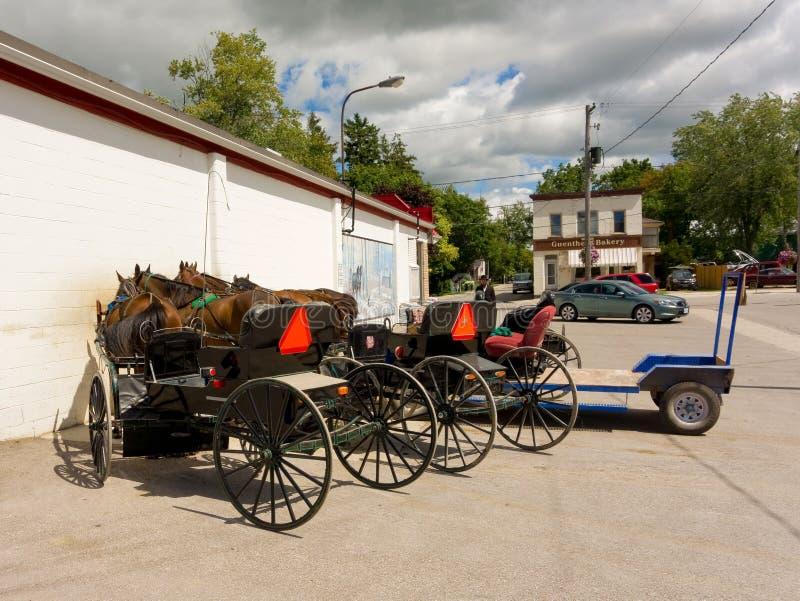 cavalli sfruttati usati per tirare i vagoni di Amish immagine stock