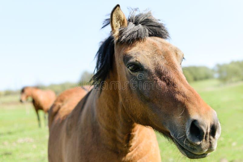 Cavalli su un prato verde fotografia stock