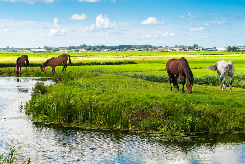 Cavalli su una banca fotografie stock