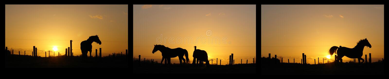 Cavalli sull'orizzonte backlit dal tramonto immagine stock libera da diritti