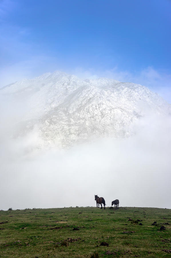 Cavalli sulle montagne nebbiose fotografia stock libera da diritti