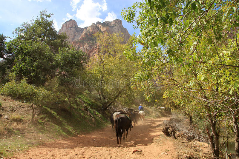 Cavalli in Zion Canyon fotografia stock