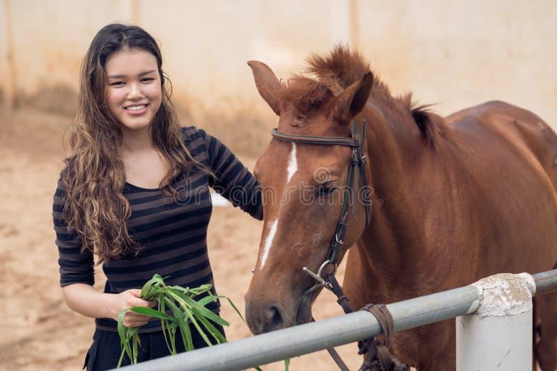Cavallino d'alimentazione fotografia stock