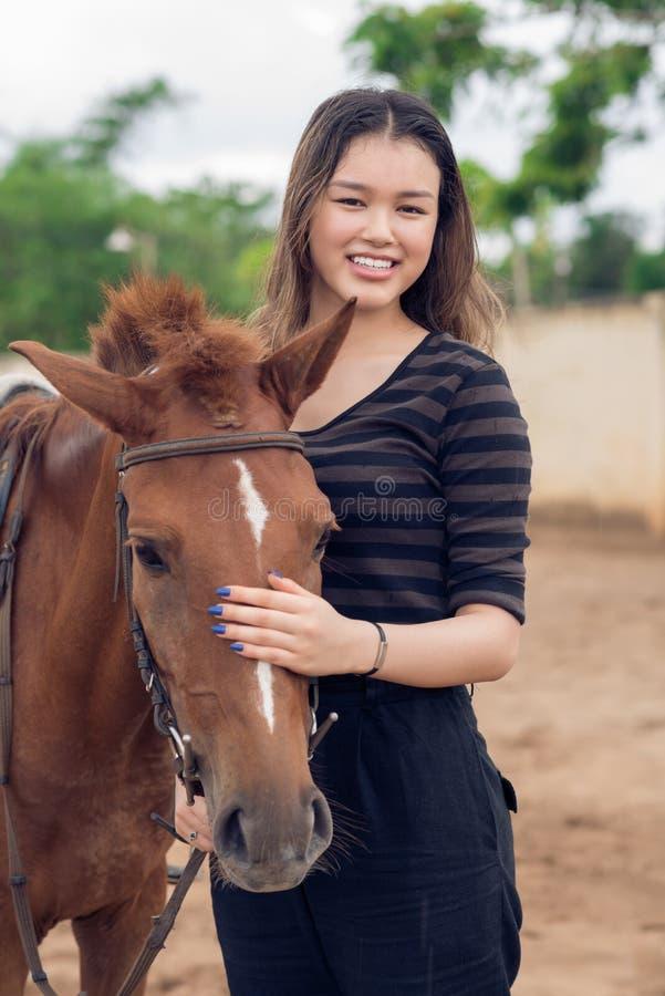 Cavallino di Brown fotografie stock