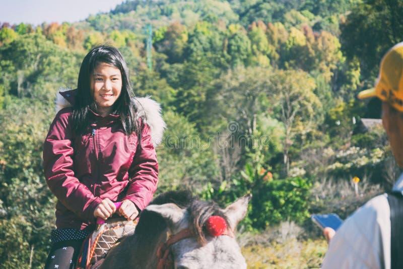 Cavallino di Brown con la sella che sta nel parco con sfondo naturale fotografie stock
