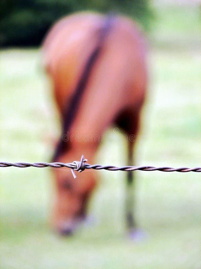 Download Cavallo immagine stock. Immagine di barbwire, podere, protezione - 200549