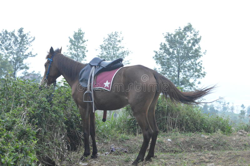 Cavallo affamato fotografie stock