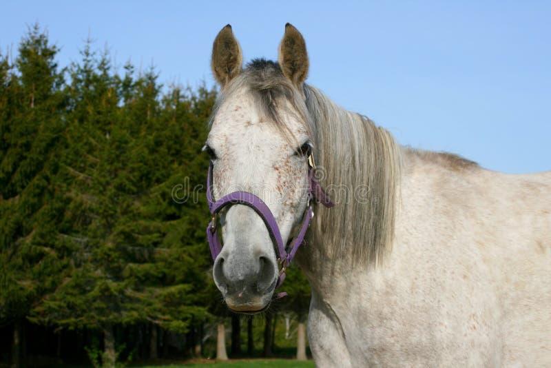 cavallo all'aperto immagini stock libere da diritti