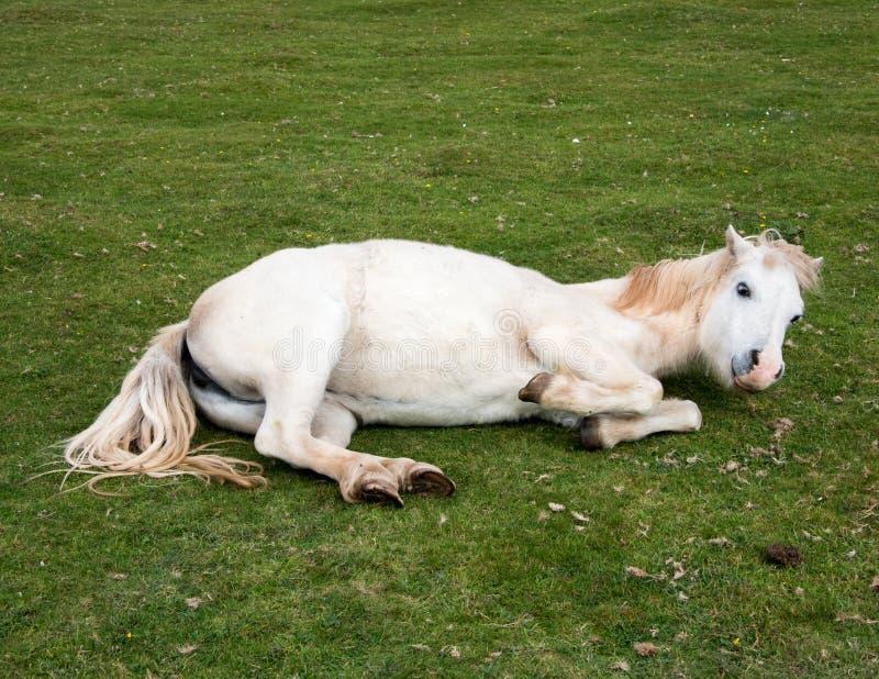 Cavallo allegro immagini stock