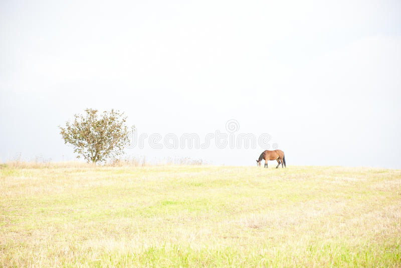 Cavallo Alto tasto fotografia stock