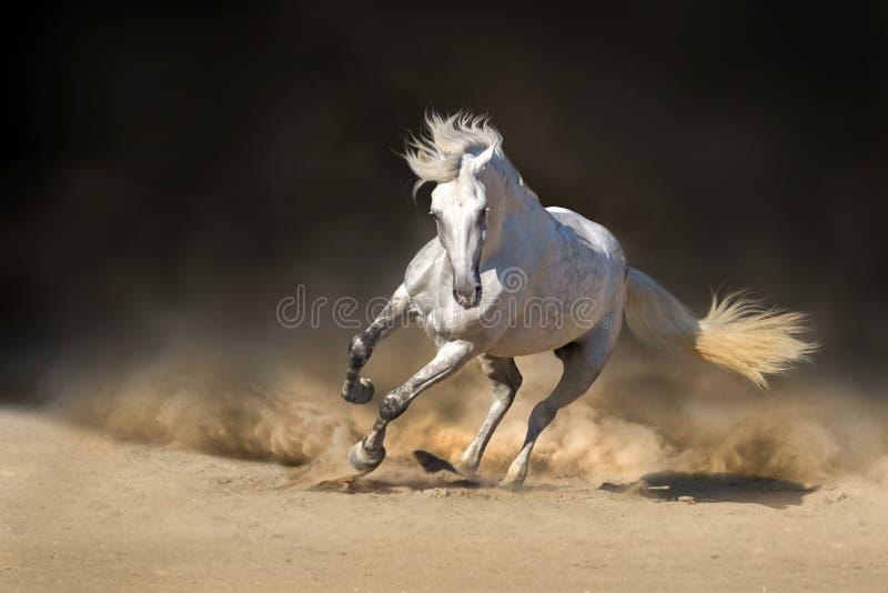 Cavallo andaluso bianco immagini stock libere da diritti