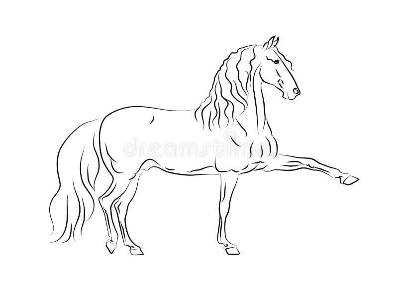 Cavallo andaluso nel movimento illustrazione vettoriale