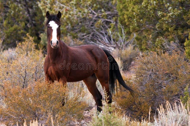 Cavallo aperto selvaggio dell'intervallo immagini stock libere da diritti