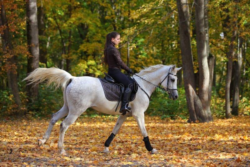 Cavallo arabo grigio di giro equestre della ragazza in legno di autunno immagine stock libera da diritti