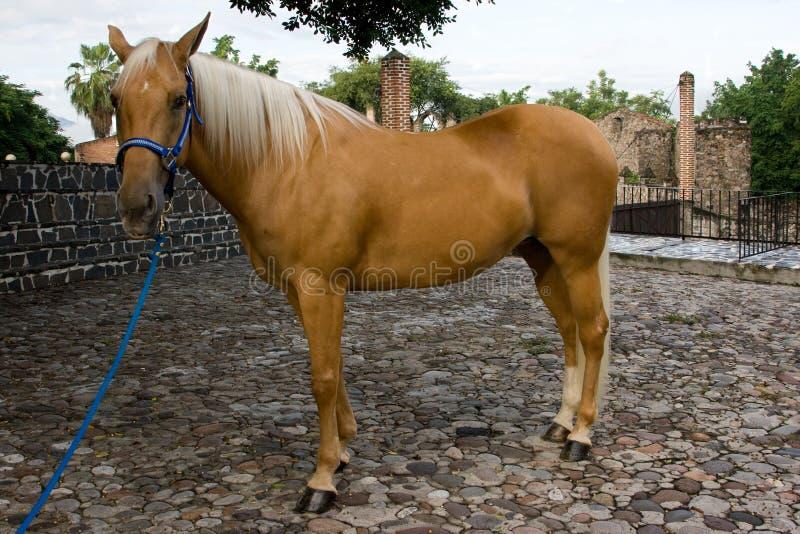 Cavallo in azienda agricola immagini stock