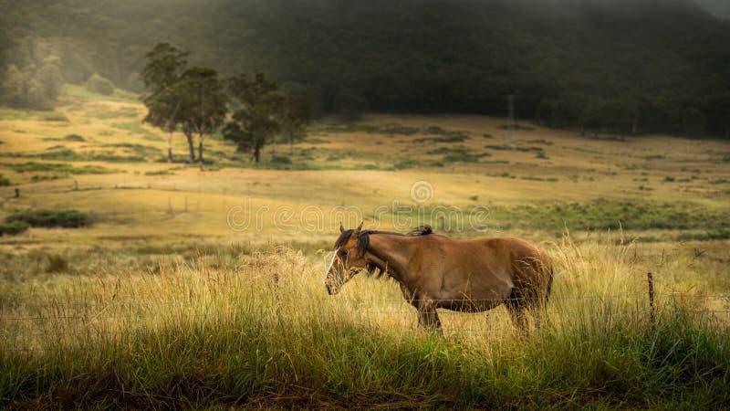 Cavallo in azienda agricola fotografia stock libera da diritti