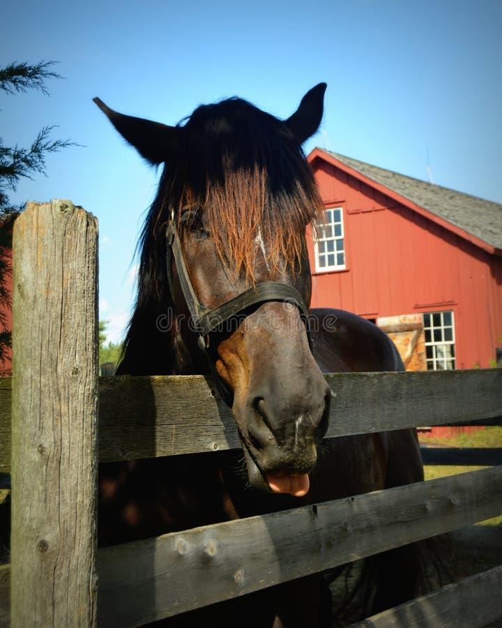 Cavallo & azienda agricola fotografie stock libere da diritti