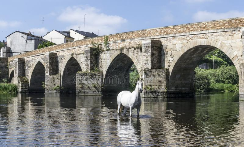 Cavallo bianco che posa nel fiume davanti ad un ponte romano fotografia stock libera da diritti