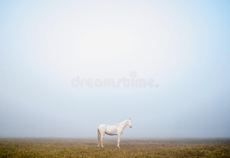 Cavallo bianco che sta da solo nella nebbia nebbiosa in una bella mattina in Calcutta, India immagini stock libere da diritti
