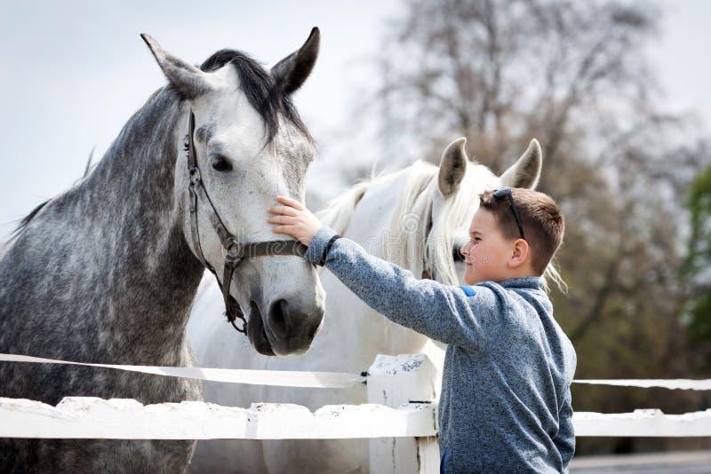 Cavallo bianco con il ragazzo fotografia stock libera da diritti