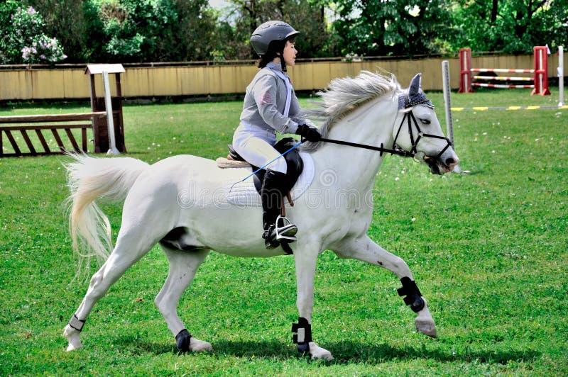 Cavallo bianco di guida del giovane ragazzo immagini stock