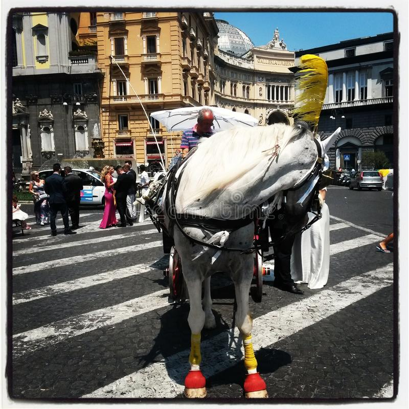 cavallo bianco a Napoli immagine stock