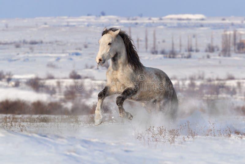Cavallo bianco in neve fotografia stock libera da diritti