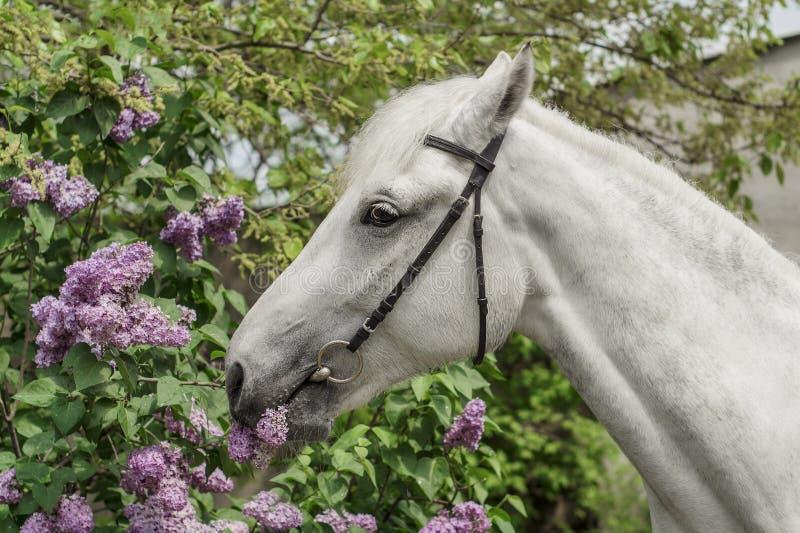 cavallo bianco sui precedenti del cespuglio immagini stock