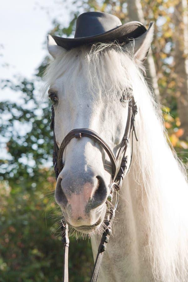 Cavallo bianco in un cappello nero immagini stock libere da diritti