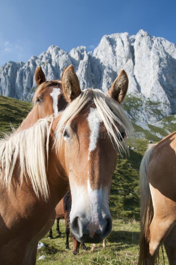 Cavallo biondo in montagna immagine stock libera da diritti