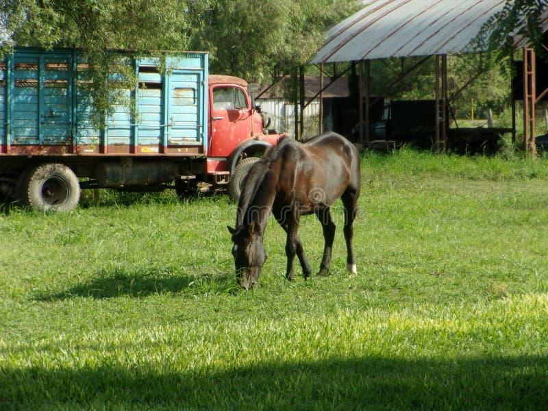 Cavallo in campagna, camion del briciolo vecchio e carpenteria immagine stock libera da diritti